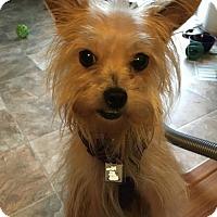 Adopt A Pet :: Pretty Pebbles - Hedgesville, WV