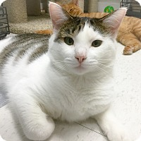Adopt A Pet :: Australia - Webster, MA