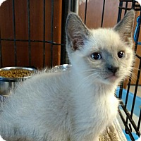Adopt A Pet :: Dale - Knoxville, TN