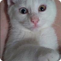 Adopt A Pet :: Estelle C1879 - Shakopee, MN