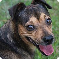 Adopt A Pet :: Jasmine - Texarkana, TX