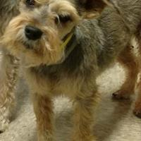 Adopt A Pet :: Ben($100) - Redding, CA