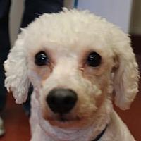 Adopt A Pet :: Abby - Douglasville, GA