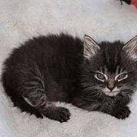 Adopt A Pet :: Sienna - Johnson City, TN
