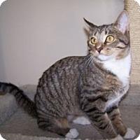 Adopt A Pet :: Starlight - Colorado Springs, CO