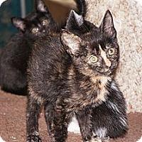 Adopt A Pet :: Vanna - Tarboro, NC