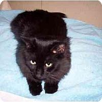 Adopt A Pet :: Wolfie - Jenkintown, PA