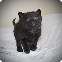 Adopt A Pet :: Bobbie - Xenia, OH