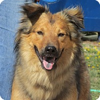 Adopt A Pet :: Maverick - Greeley, CO
