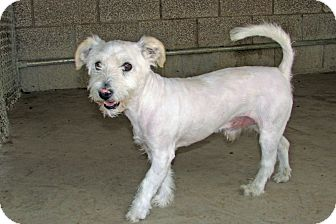 Terrier (Unknown Type, Small) Mix Dog for adoption in Ruidoso, New Mexico - Titan