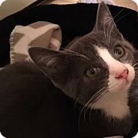 Adopt A Pet :: Harley - Jackson, NJ