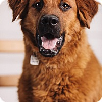 Adopt A Pet :: Toby - Portland, OR
