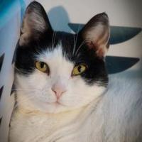 Adopt A Pet :: Hudson - Metairie, LA