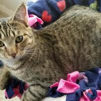 Adopt A Pet :: Austin - Fairfax, VA