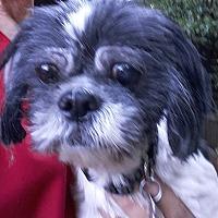 Adopt A Pet :: Olivia - Salem, OR