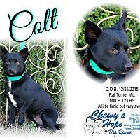 Adopt A Pet :: Colt - Boyd, TX