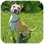Photo 1 - American Pit Bull Terrier Mix Dog for adoption in San Clemente, California - WALLY