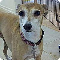 Adopt A Pet :: Poppy - Costa Mesa, CA