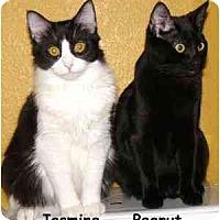 Adopt A Pet :: Jasmine - AUSTIN, TX