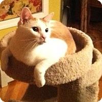 Adopt A Pet :: Romeo - Fairfield, CT