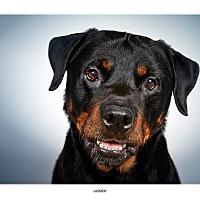 Adopt A Pet :: Jasmine - New York, NY