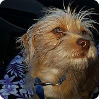 Adopt A Pet :: Benji - Marietta, GA