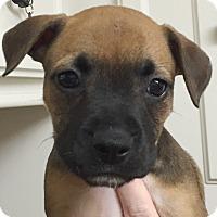 Adopt A Pet :: Calypso#09F - Orlando, FL