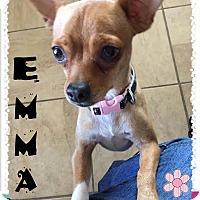 Adopt A Pet :: EMMA - Higley, AZ