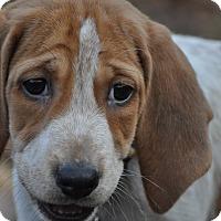 Adopt A Pet :: Sammie - Chesapeake, VA