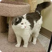 Adopt A Pet :: Darling - Phoenix, AZ
