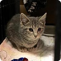 Adopt A Pet :: Miles - East Brunswick, NJ