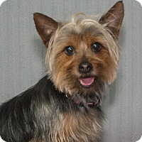 Adopt A Pet :: Cooper - Elmwood Park, NJ