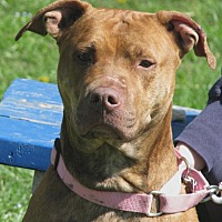 Terrier (Unknown Type, Medium) Mix Dog for adoption in New Kensington, Pennsylvania - Dutchess