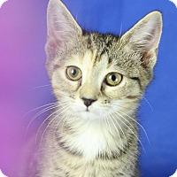 Adopt A Pet :: Toby - Winston-Salem, NC