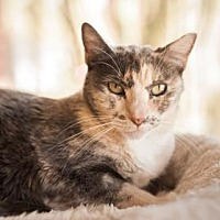Adopt A Pet :: Peaches - Palm Springs, CA
