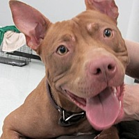 Adopt A Pet :: Ginger2 - Conroe, TX