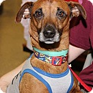 Adopt A Pet :: Eddie (July Special-$100)