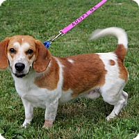 Adopt A Pet :: Edgar - Harrison, NY