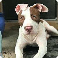 Adopt A Pet :: Emie - Frisco, TX