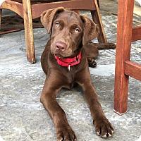 Adopt A Pet :: Jillie - San Diego, CA