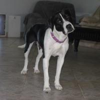 Adopt A Pet :: ROXY - Wellington, FL