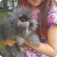 Adopt A Pet :: Ned - Albany, NY
