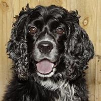 Adopt A Pet :: Negrito - oakland park, FL