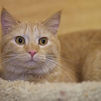 Adopt A Pet :: Buffy - Sioux Falls, SD