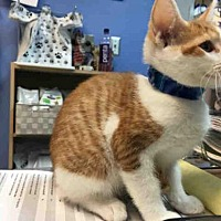 Adopt A Pet :: GEORGE - Canfield, OH