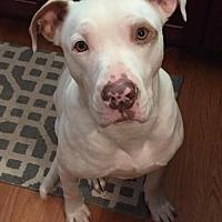 Adopt A Pet :: Newman - Dallas, GA