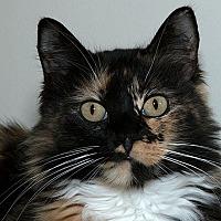 Adopt A Pet :: Tiffany M - Sacramento, CA