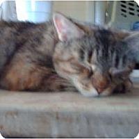 Adopt A Pet :: Little One - Hampton, CT