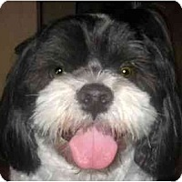 Adopt A Pet :: Leo-VA - Mays Landing, NJ