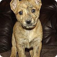 Adopt A Pet :: Sunflower - Phoenix, AZ